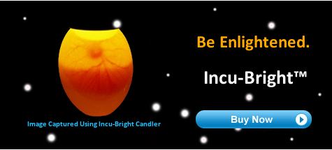 Incu-Bright™ Egg Candler Image