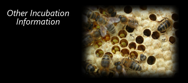 Other Incubation Information