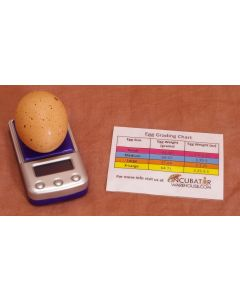 EggScale with sizing chart